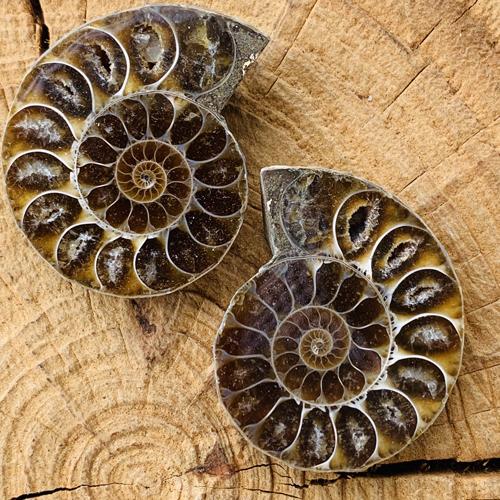 Ammoniet fossiel paar 45 mm