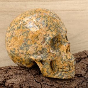 Rhyoliet schedel skull