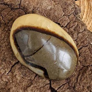 Septaria Septarie gepolijst