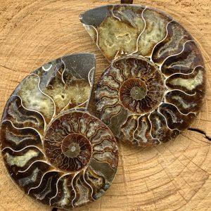 Ammoniet paar fossiel 125 x 95 mm