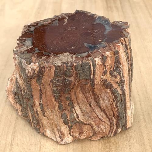 Versteend Hout stam ruw fossiel