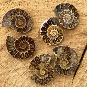 Ammoniet fossiel paar klein 35 mm